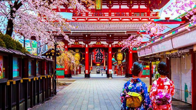 stali izvestny daty cvetenija sakury v japonii