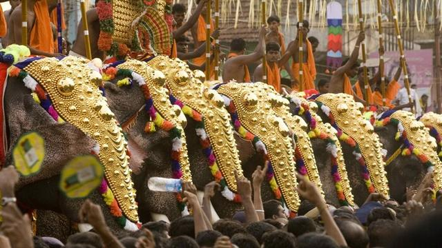 v indii provedut festival slonov