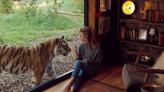 lvy tigry i volki 1